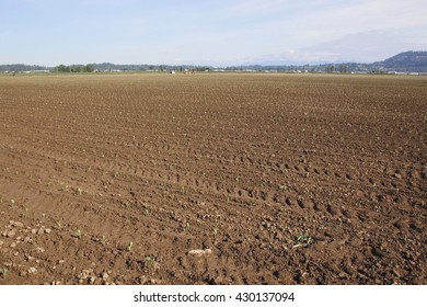 Acres of prime agricultural land will be used for growing cauliflower/Fraser Valley Vegetable Crop/Acres of prime agricultural land will be used for growing cauliflower.