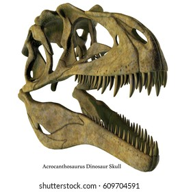 Acrocanthosaurus Dinosaur Skull with Font 3d illustration - Acrocanthosaurus was a carnivorous theropod dinosaur that lived in North America in the Cretaceous Period.