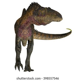 Acrocanthosaurus on White 3D illustration - Acrocanthosaurus was a theropod carnivorous dinosaur that lived in North America during the Cretaceous Period.