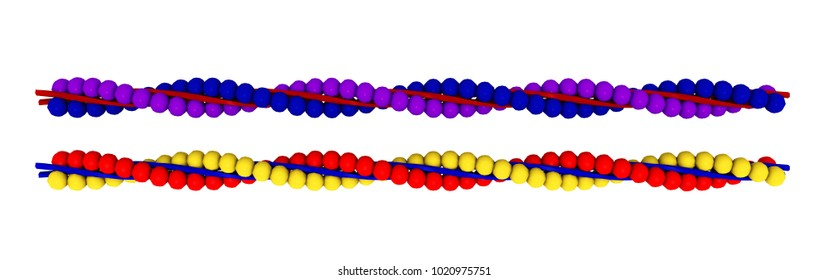 Actin isolated on white background Computer generated 3D illustration