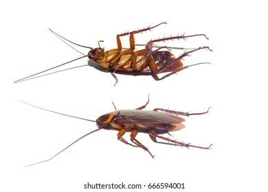 action image of Cockroaches, Collection image of Cockroaches isolated on white background