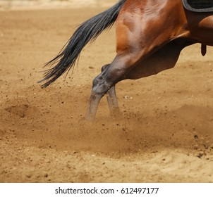 An action photo of the muscles of the back legs and hip on a horse.