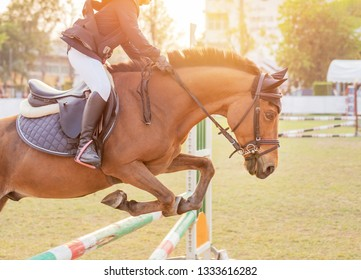 action rider horse jumping over hurdle obstacle during dressage test competition
