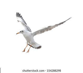 Action of seagull bird