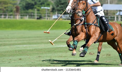 An Action shot of horse speed in polo match.