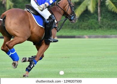 Action Shot Of the Polo Player Playing Polo Horse During the Games.