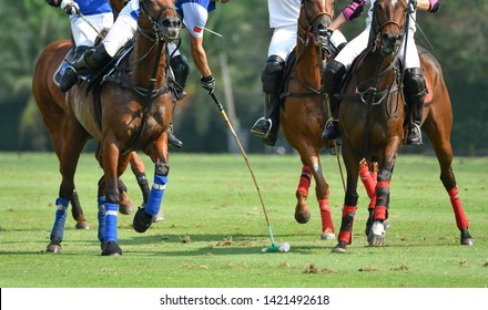 Action Shot Of the Polo Player, Playing Polo Horse During the Match.