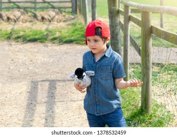 Active boy standing next to animals cages looking at an animal in the farm with bright light sunny day,  Concept for toddler development or children activities outdoors with family on holiday