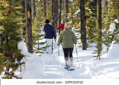 Active family snow shoes trail through backlight pine tree forest during winter.