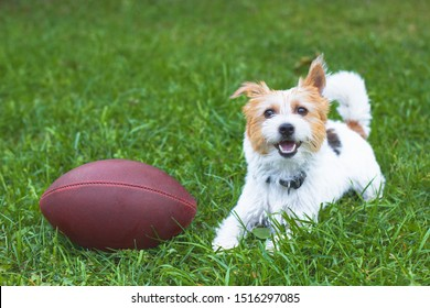 Active happy Parson Terrier puppy resting on a green meadow. Happy dog smiling near the ball on green grass. Jack Russell Terrier plays rugby, American football ball. Copy Space.