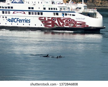 Active Pass, British Columbia, Canada, July 2017. Large ship attempts to avoid Orca Pod.  BC Ferries Salish Eagle encounters Orcas at Helen Point. The orca population is on the decline.