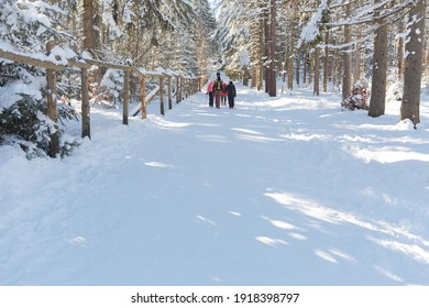 Active people in the fresh air. Nordic walking. People-travelers walking through the snow-covered forest