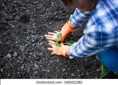 active senior woman planting seedlings in vegetable garden