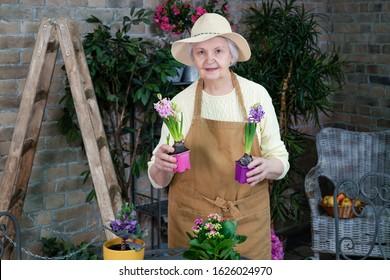 Active senior women working potting spring flowers