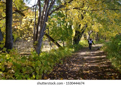 active woman walking her dog in a trail at fall