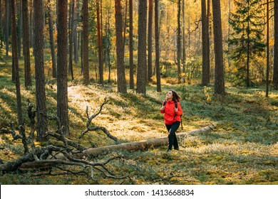 Active Young Beautiful Caucasian Lady Woman Backpacker In Red Jacket Walking In Autumn Green Forest. Active Lifestyle In Fall Age Nature During Sunset.
