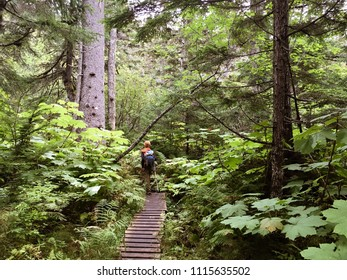 An active young boy hikes through the temperate rainforest of Haines Alaska on his way up Mt. Riley in Chilkat State Park on the Chilkat Peninsula. USA.