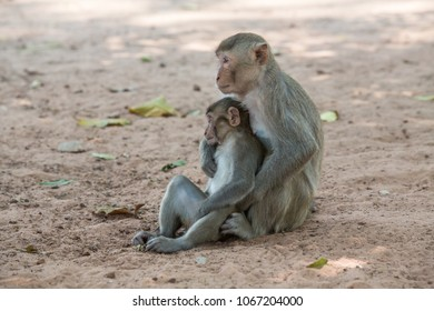 Activities of small monkeys in tropical forest areas.