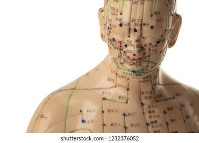 Acupuncture Model isolated on white background