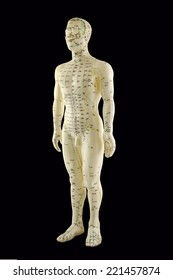 Acupuncture model showing Traditional Chinese Medicine Meridians and acupuncture points on male figure