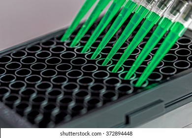 Adding green samples to a black 96 well plate using a multi-channel pipette.
