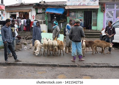 ADDIS ABABA, ETHIOPIA-SEPTEMBER 11, 2017: Unidentified people buy and sell sheep and goats on the street in Addis Ababa, Ethiopia.