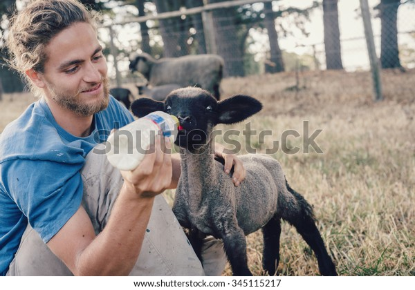 ADELAIDE, AUSTRALIA -  NOV 2014: french wwoofer Pierre on a farm feeding a young lamb. The Australian Government no longer allows voluntary work, such as wwoofing, to count towards a 2nd year visa.