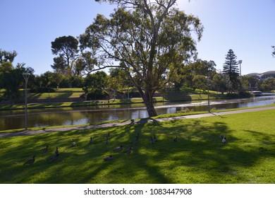 Adelaide Festival Centre & Torrens River