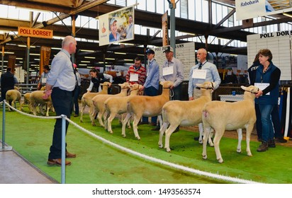Adelaide, South Australia, August 31st 2019: Royal Adelaide Show - Judge and row of ewes in competition.