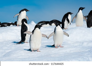 Adelie penguins colony on iceberg, Antarctica