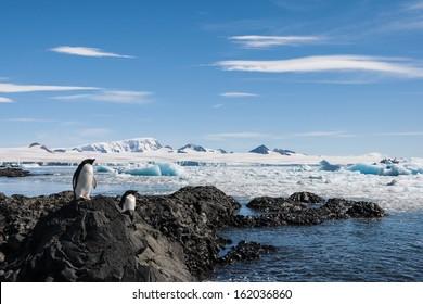 Adelie Penguins enjoying the sun in Brown Bluff, Antarctica