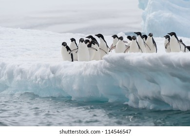 Adelie penguins on the iceberg in Antarctica