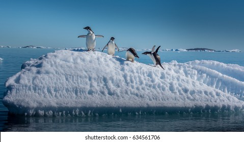 Adelie penguins on small ice berg in Antarctica