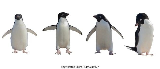 Adelie penguins set isolated on white background