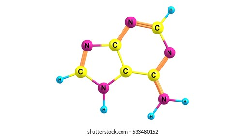 Adenine is one of the two purine nucleobases, the other is guanine, used in forming nucleotides of the nucleic acids. 3d illustration