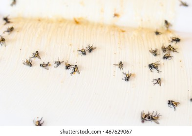 Adhesive insect trap.Flies caught on sticky fly paper trap. selective focus