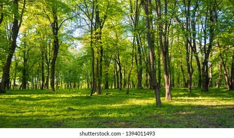 Adica forest in Vukovar, Croatia