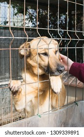 Adopt a dog concept. Cute dog in a cage and a woman hand caressing its face.