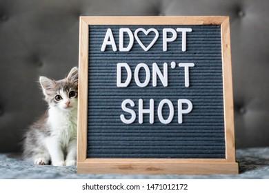 Adopt Don't Shop Kitten Letterboard