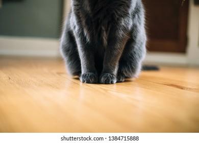 20 or 50 Tibetan Antique Silver Cat Kitten 17mm Charm Pendants 50330