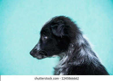 Adorable adoption puppy isolated on blue. Cute homeless dog from shelter