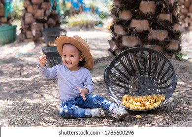 Adorable Asian kid preschool collect date palm fruits on hand while waiting mother and farther working in garden plantation farm, kid playing alone sitting on dusty soil land and damage rot date palm.