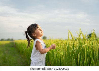 Adorable asian little girl is holding the ear rice in the rice field and she closed the eyes to touch the texture of rice, concept of natural learning activity for kid by traveling in family lifestyle