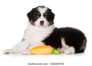 adorable australian shepherd puppy lying sown on white background