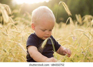 Adorable baby boy checks the quality of the wheat harvest
