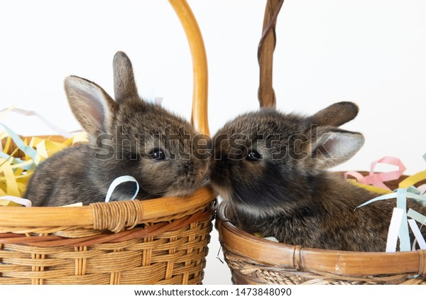 adorable-baby-bunnies-easter-baskets-600