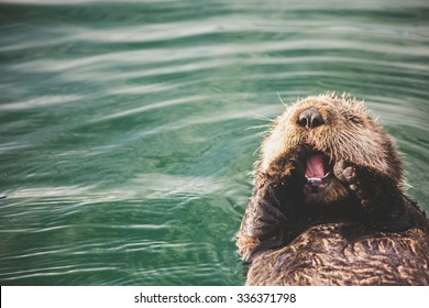 Adorable baby otter in the Homer Small Boat Harbor in Homer, AK.