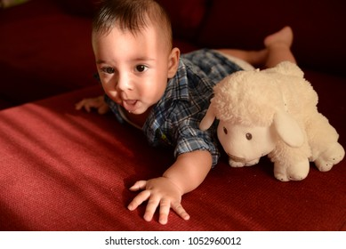 Adorable baby playing with stuffed sheep