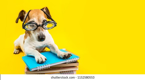 Adorable back to school dog banner. Yellow background. Dog in glasses