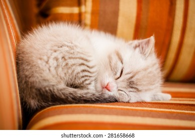 Adorable and beautiful little white kitty cat sleeping